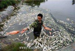 河南干旱,旱情严重上万活鱼死亡